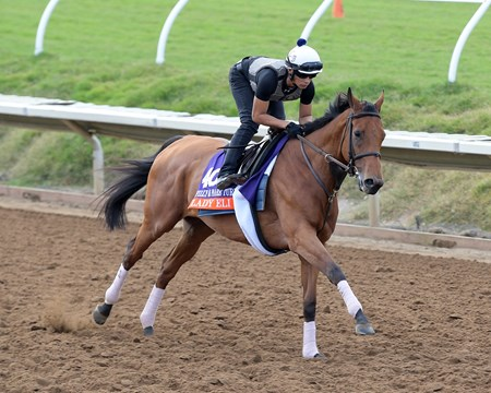 Lady Eli Breeders' Cup horses on track at Del Mar racetrack on Nov. 1, 2017 Del Mar Thoroughbred Club in Del Mar, CA.