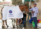 Gun Runner Nov. 5 at Del Mar, the day after his Breeders' Cup Classic victory