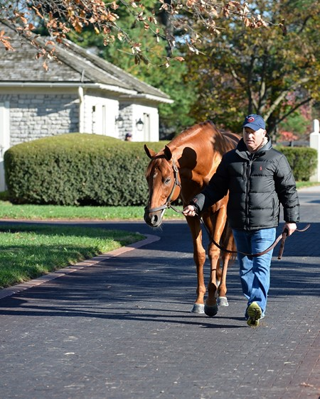Gun Runner at Three Chimneys Horses at the Keeneland November sale on Nov. 9, 2017 Keeneland in Lexington, KY.