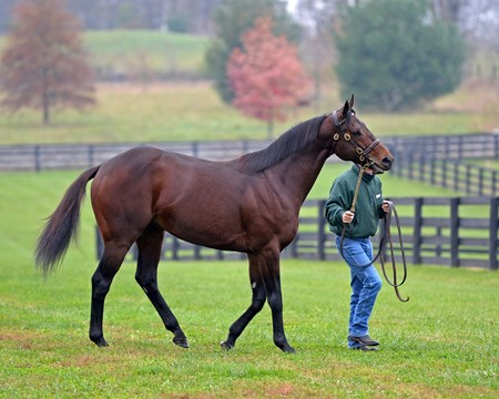 American Freedom at Airdrie Newly retired stallions for the 2018 breeding season at Central Kentucky farms Nov. 13, 2017  in Lexington, KY.