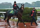 German contender Iquitos preparing for the Japan Cup at Tokyo Racecourse