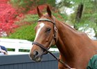 Stellar Wind at the Keeneland November sale