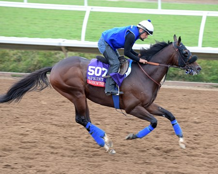 Ransom the Moon Breeders' Cup horses on track at Del Mar racetrack on Nov. 1, 2017 Del Mar Thoroughbred Club in Del Mar, CA.