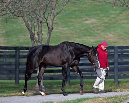 Midnight Storm at Taylor Made Newly retired stallions for the 2018 breeding season at Central Kentucky farms Nov. 11, 2017  in Lexington, KY.