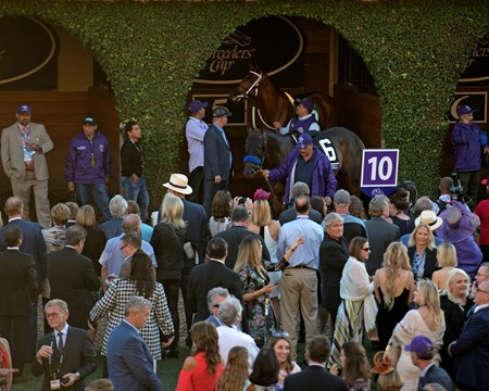 Paddock scenes before the Breeders Cup Classic