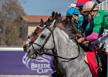 Disco Partner & Irad Ortiz leaving the gate in Breeders' Cup Turf Sprint at Del Mar on November 3rd 2017