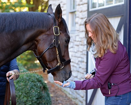 Classic Empire gets mints from Claire Novak Horses at the Keeneland November sale on Nov. 9, 2017 Keeneland in Lexington, KY.