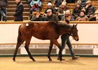 A Kodiac colt tops the Nov. 30 session of the Tattersalls December foal sale