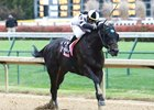 Limousine Liberal pulls away in the Bet on Sunshine Stakes at Churchill Downs Nov. 18