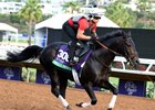 Beach Patrol gallops ahead of the Breeders' Cup Turf at Del Mar