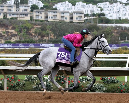 Blonde Bomber on the track at Del Mar on November 1, 2017