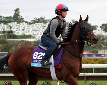 A Lot Of Animal Kingdom In Untamed Domain Bloodhorse