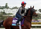 Untamed Domain training Nov. 1 at Del Mar