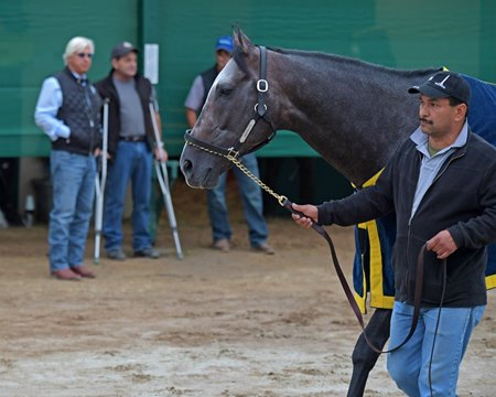 Trainer Bob Baffert (left) and assistant trainer Jimmy Barnes observe Arrogate as he walks after training at Del Mar