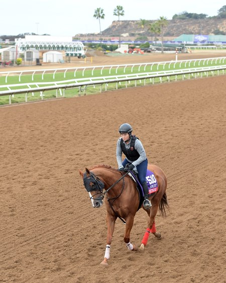 Whitmore Breeders' Cup horses on track at Del Mar racetrack on Nov. 1, 2017 Del Mar Thoroughbred Club in Del Mar, CA.