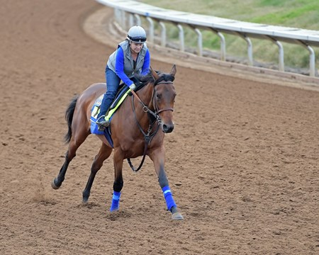 Abel Tasman Breeders' Cup horses on track at Del Mar racetrack on Nov. 1, 2017 Del Mar Thoroughbred Club in Del Mar, CA.