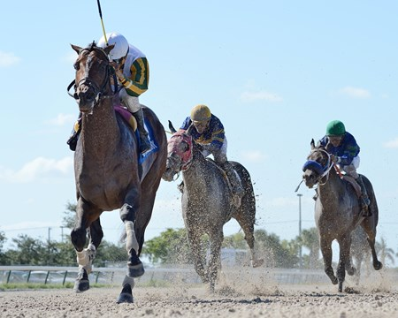 Wildcat's Legacy wins the 2017 Juvenile Sprint Stakes