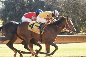 Scintillation won the first race on Nov. 24 at Finger Lakes Gaming & Racetrack by a neck