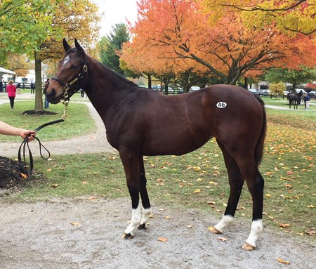 Hip 46 American Pharoah--Untouched Talent filly at the 2017 Fasig-Tipton November sale