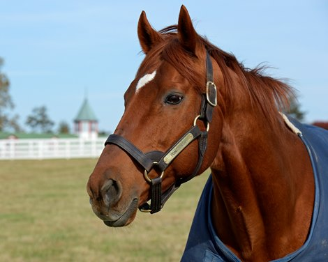 Point Given Pensioned To Kentucky Horse Park Bloodhorse