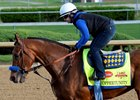 Hoppertunity