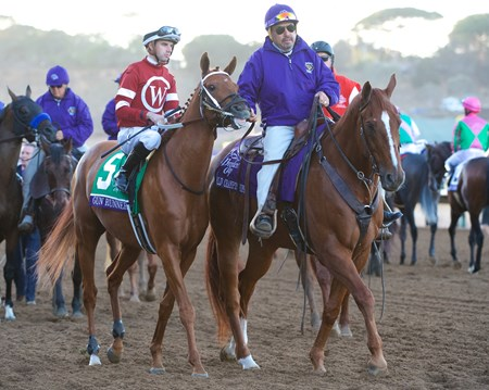 Gun Runner before the Breeders Cup Classic on November 4, 2017