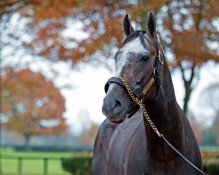 Arrogate has now retired at precisely the time that his sire might finally, posthumously, become a consistent sire of consistent sires.