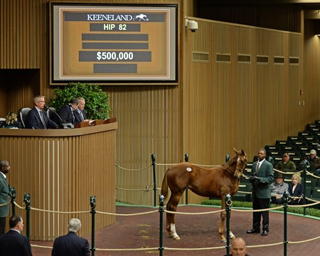 2017 Keeneland November Sale Hip 82 filly American Pharoah—Life At Ten
