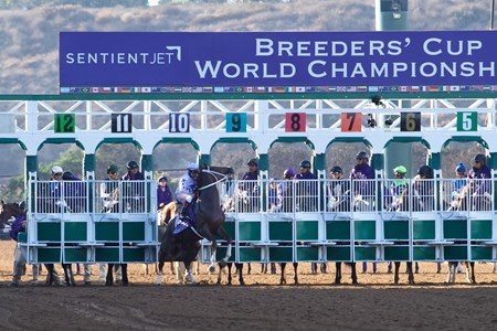 Golden Dragon broke from the gate early before the Breeders Cup Juvenile on November 4, 2017
