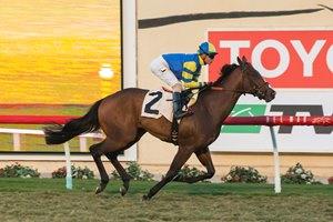 Thoroughbred Racing Bloodhorse