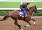 Giant Expectations trains toward the Breeders' Cup Dirt Mile at Del Mar Nov. 1