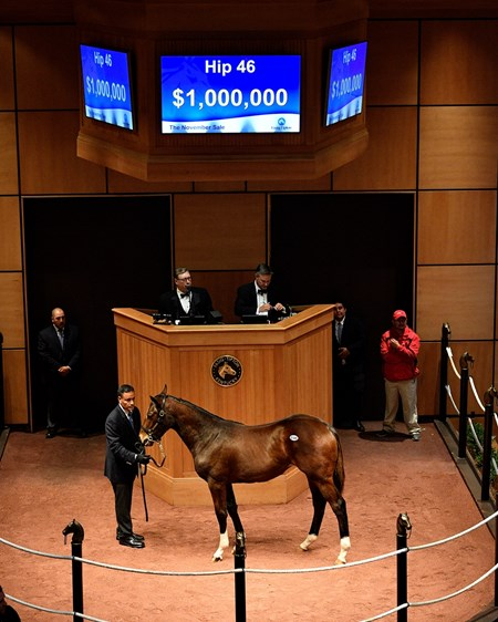 Hip 46 American Pharoah  filly from Untouched Talent and Eaton Sales at Fasig-Tipton November sale.
