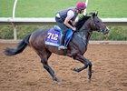 U S Navy Flag, who finished off the board in the Breeders' Cup Juvenile, will return to the turf April 14 in Ireland