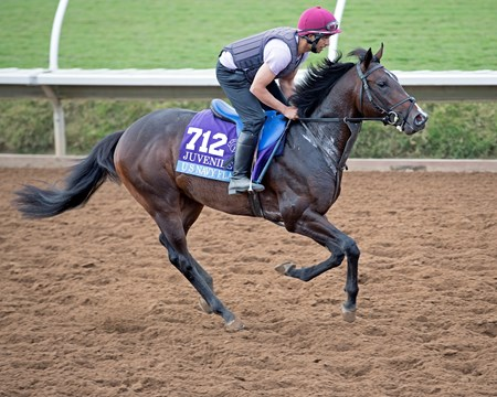 US Navy Flag Breeders' Cup horses on track at Del Mar racetrack on Nov. 2, 2017 Del Mar Thoroughbred Club in Del Mar, CA.