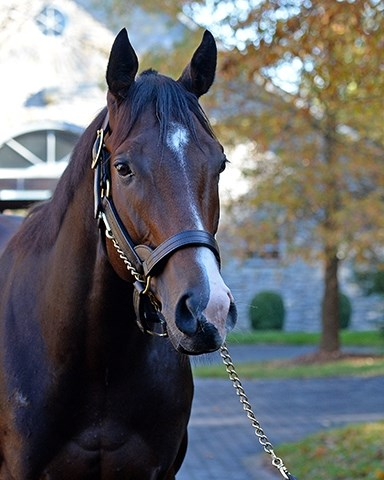 Classic Empire at Ashford Stud Horses at the Keeneland November sale on Nov. 9, 2017 Keeneland in Lexington, KY.