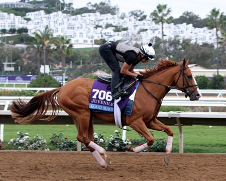 Good Magic on the track at Del Mar on November 1, 2017