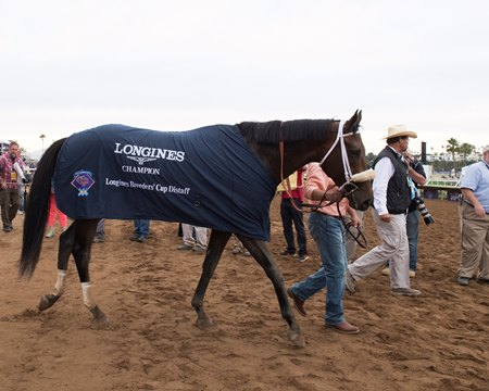 Forever Unbridled after winning the Breeders' Cup Distaff at Del Mar