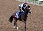 Happily on the track ahead of the Juvenile Fillies Turf during last year's Breeders' Cup at Del Mar