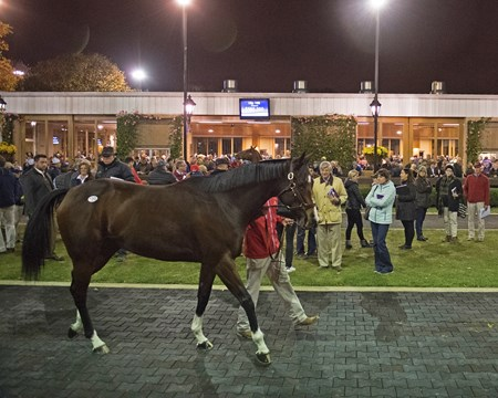 Songbird night scenes Horses at the Fasig-Tipton Kentucky November sale on Nov. 6, 2017 Fasig-Tipton in Lexington, KY.