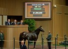 Oscar Party brought $1.9 million in foal to Tapit