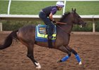 Mubtaahij galloping before an eighth-place finish in the Breeders' Cup Classic at Del Mar