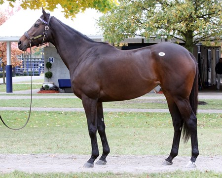 Hip 99, Miss Temple City,  2017 Fasig-Tipton November Sale