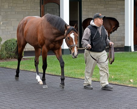 Gormley at Spendthrift Newly retired stallions for the 2018 breeding season at Central Kentucky farms Nov. 11, 2017  in Lexington, KY.