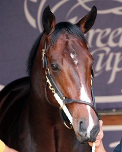Bolt d'Oro in the Del Mar paddock ahead of the Breeders' Cup