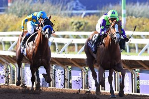 First two home in the Sentient Jet Breeders' Cup Juvenile Good Magic and Solomini are by Curlin