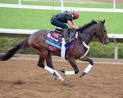 Catholic Boy To Try Dirt In Remsen Bloodhorse