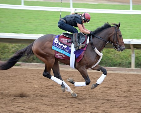 Catholic Boy Breeders' Cup horses on track at Del Mar racetrack on Nov. 1, 2017 Del Mar Thoroughbred Club in Del Mar, CA.