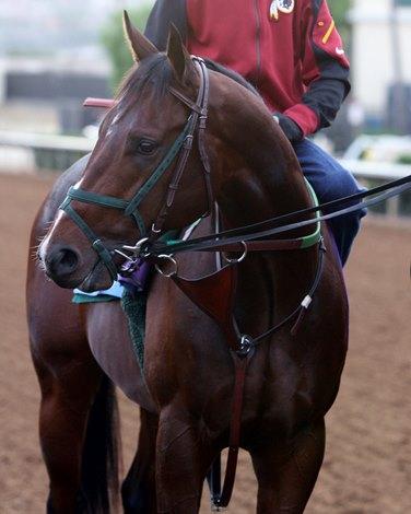 San Felipe New Goal For Bolt D Oro Bloodhorse