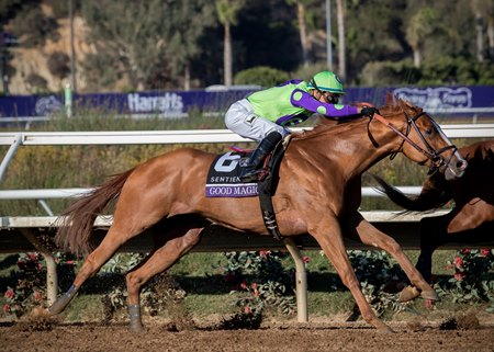 Reigning juvenile champion Good Magic chases down Solomini to take the Breeders' Cup Juvenile at Del Mar