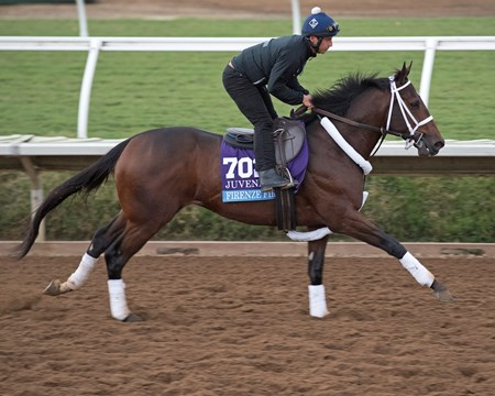 Firenze Fire Breeders' Cup horses on track at Del Mar racetrack on Nov. 2, 2017 Del Mar Thoroughbred Club in Del Mar, CA.